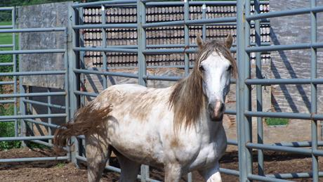 Adopt A Wild Horse Sept. 8-10 In Ewing, Il