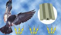 Low-profile track system deters pest birds