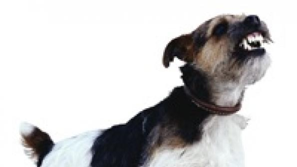Los Angeles gets stricter on dog barking