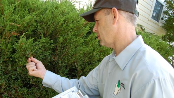 Custom tree and shrub care: Going above and beyond the basics of landscaping (with related video)