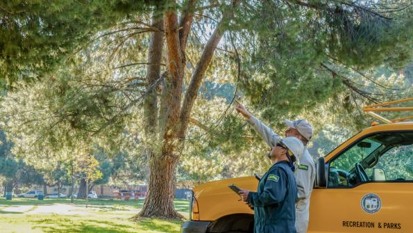 Tree management goes digital in California (with related video)