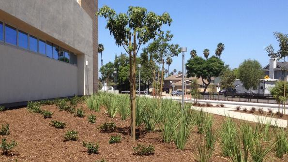 Mulch makes a difference at school in drought-stricken California