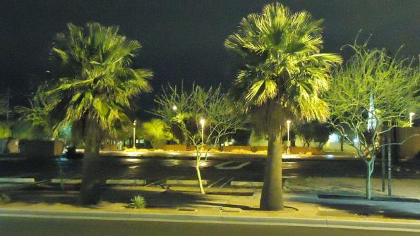 Phoenix to divert palm fronds from landfills, use as animal feed