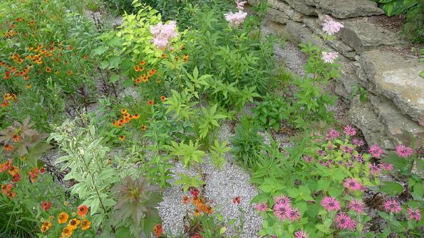 Municipalities turn to rain gardens as ways to manage stormwater, beautify areas