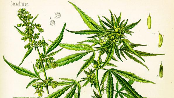 Seven states pass marijuana legalization measures