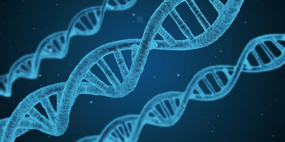 Probabilistic genotyping in forensic DNA analysis